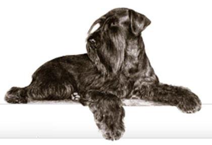 Bild för tillverkare Hundgott