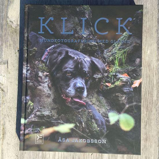 KLICK - hundfotografering med glädje